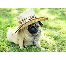 Young pug with a hat Photographic Print