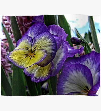 Purple yellow white flower Poster