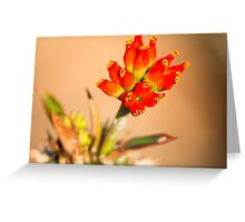 Red Bells Greeting Card