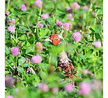 """ Pheasant In Thistles "" Photographic Print"