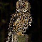 long eared owl by Peter Wiggerman