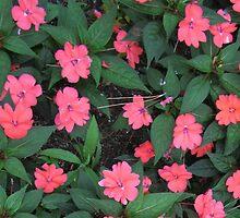 """Pink by Scott """"Bubba"""" Brookshire"""