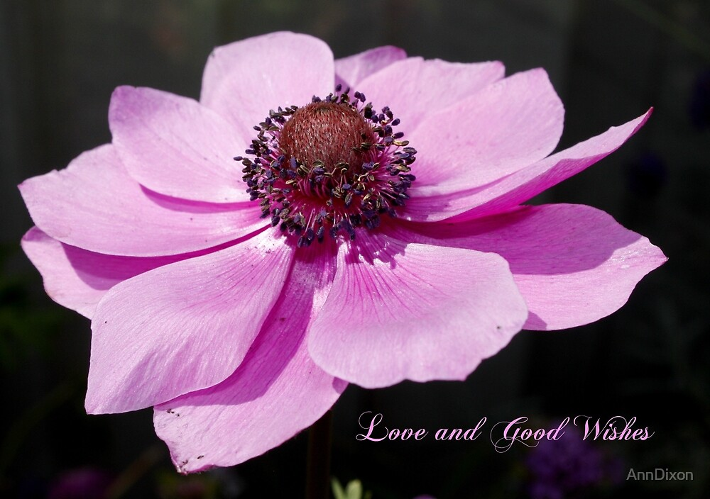 Love & Good Wishes by AnnDixon