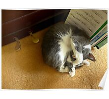 Shadow sleeping under the piano Poster