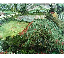 Vincent Van Gogh - Field With Poppies Photographic Print