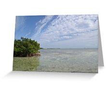 Key West Mangroves Greeting Card