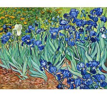 Vincent Van Gogh - Irises, 1889  Photographic Print