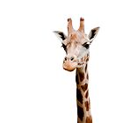 Giraffe head by Jari Vipele
