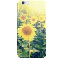 sunflowers at the cornfield iPhone Case/Skin