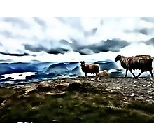 Welsh Sheep Photographic Print
