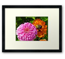 Bizzy Bumble Bee Framed Print