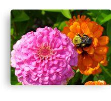 Bizzy Bumble Bee Canvas Print