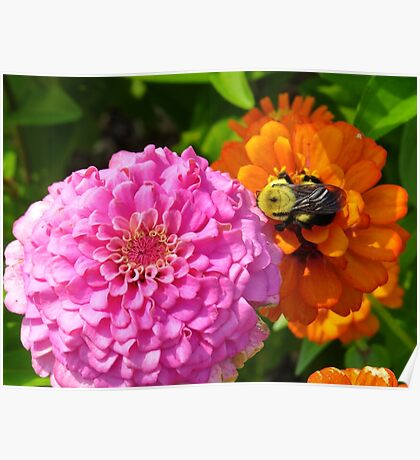 Bizzy Bumble Bee Poster