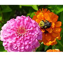 Bizzy Bumble Bee Photographic Print