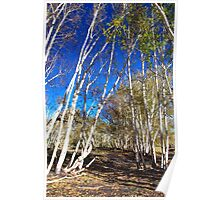 Silver Birch On Mount Etna Poster