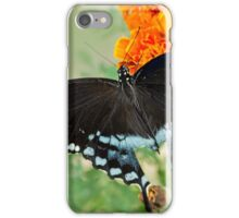 Swallowtail butterfly on marigolds iPhone Case/Skin