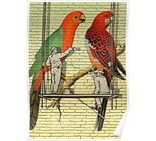 Parrots Mural  Poster