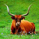 Texas Longhorn by Mechelep