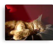 Maine Coon Kitten Sleeping Metal Print
