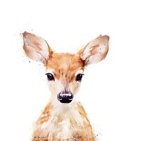 Young Deer Photographic Print