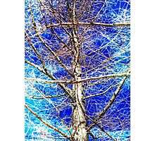 Tangled Web Photographic Print