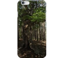 Trail Guardian - an Ancient Beech Tree in a Pine Forest iPhone Case/Skin