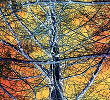 Tangled Web 2 by SRowe Art