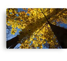 Autumn Shadows Geometry  Canvas Print