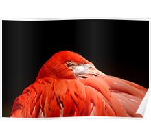 Flamingo sleeping Poster
