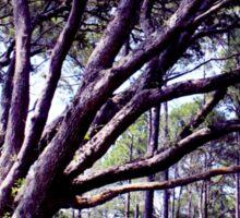 Trees UpFront Artistic Photograph Sticker