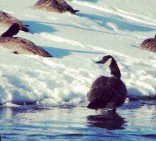 Winter Geese Sticker