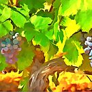 Bunches of Grapes by jean-louis bouzou