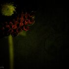 Red dahlia with green background by KSKphotography
