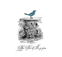 Blue Bird of Happiness Photographic Print