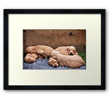 Puppy love Framed Print