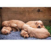 Puppy love Photographic Print