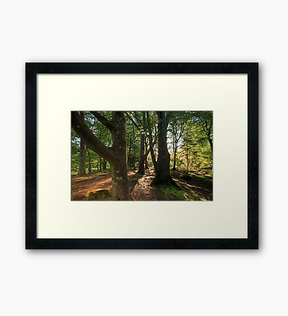 The Irish Forest / Game of Thrones location Framed Print