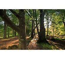 The Irish Forest / Game of Thrones location Photographic Print