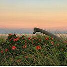 Beach Dune Sunset by MDossat