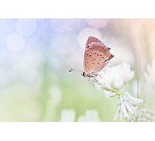 Serenity... Photographic Print