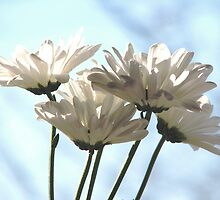 Fresh As A Daisy  by AngieDavies