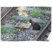 cat on the rails Poster