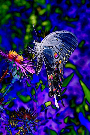 Butterfly Blues by christiane
