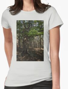 Trail Guardian - an Ancient Beech Tree in a Pine Forest Womens Fitted T-Shirt