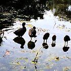 Ducks and ducklings walking on water by HeklaHekla