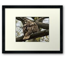 Curious Red Tail Hawk in the Spring Forest Framed Print