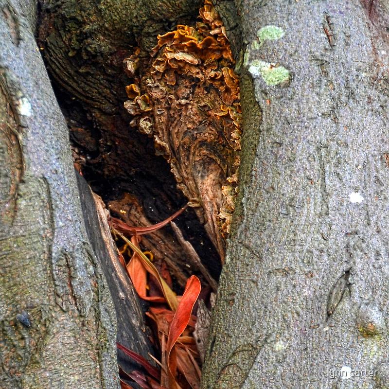 A Split In The Tree........... by lynn carter