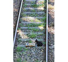 cat on the rails Photographic Print