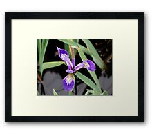 Cape Spear - Lonely Bloom Framed Print