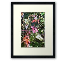 colorful leaves in the forest Framed Print